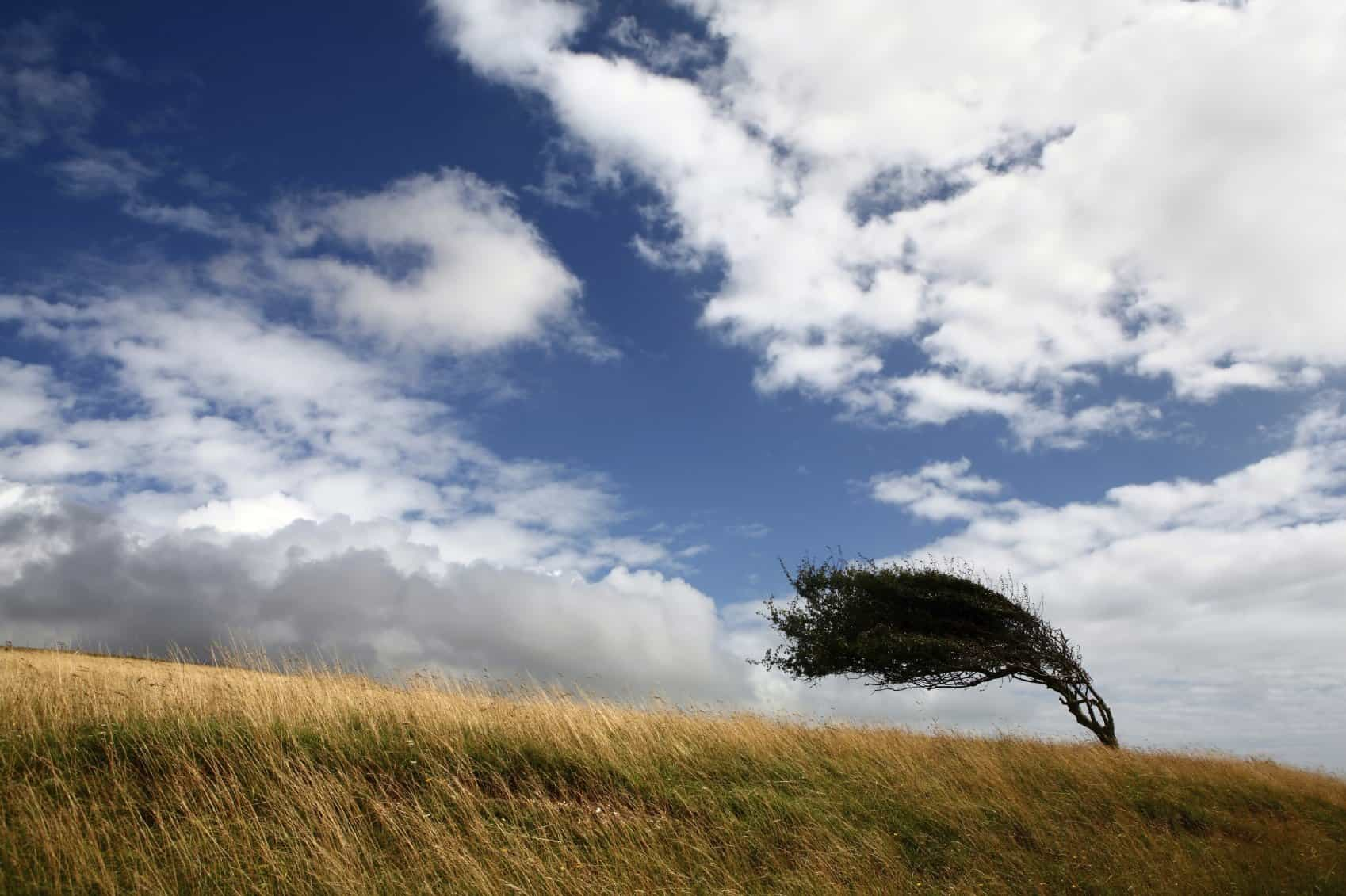 stress management as a tree blowing in the wind
