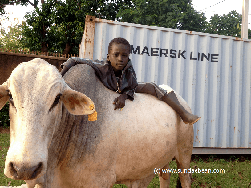 West African cowboy teaches us global skills