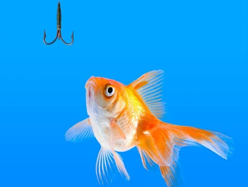 Fish and a hook: traps to avoid when visiting home by Sundae Schneider-Bean