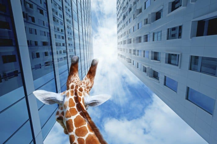 giraffe in the city like getting job abroad by Sundae Schneider-Bean